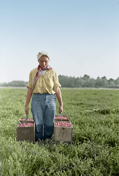 Depression Era Field Worker (after photo restoration & colorization)