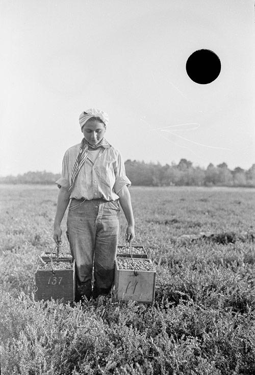 Depression Era Field Worker (before photo restoration & colorization)