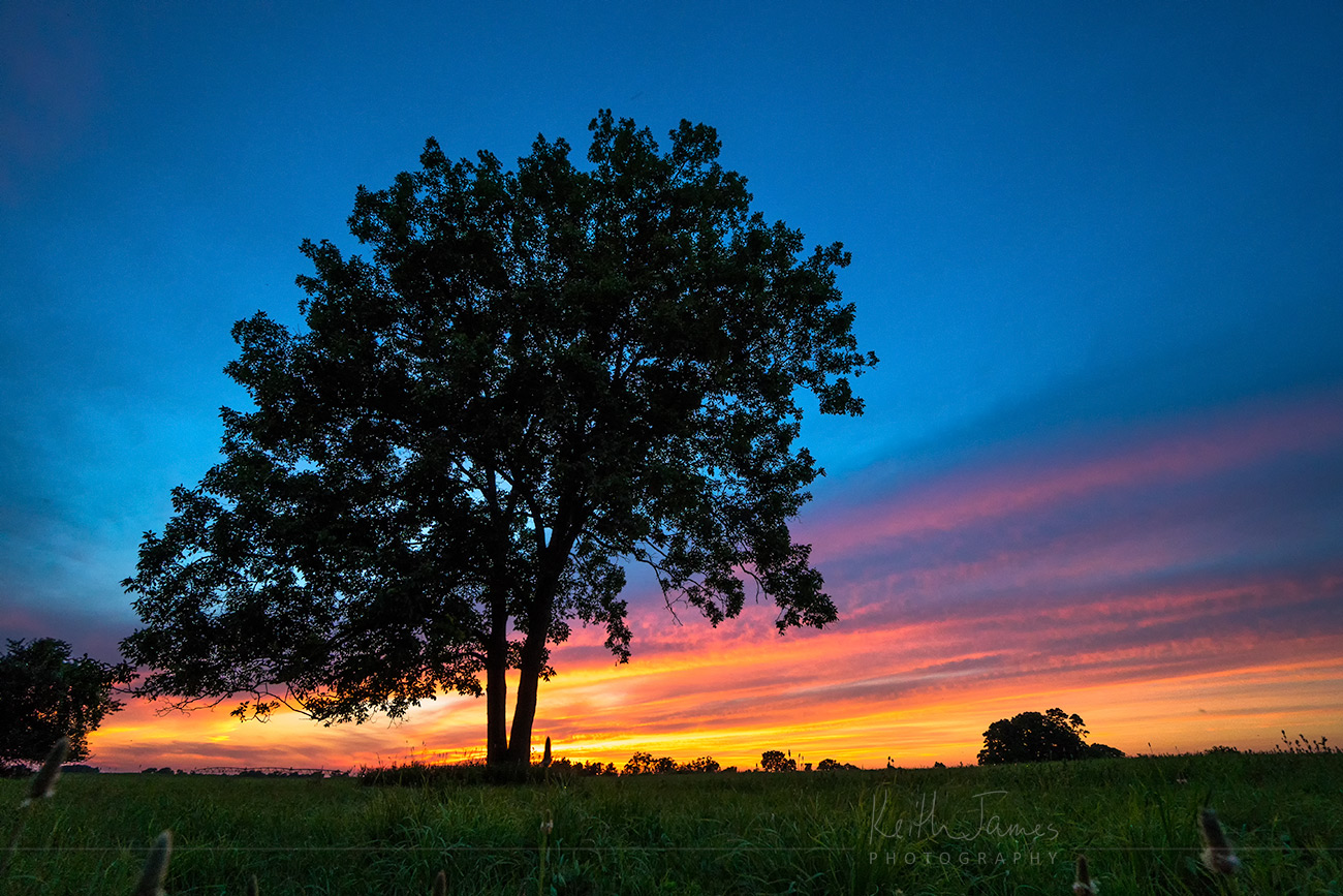 Landscape Photography: Sunset Tree in LaGrange County, Indiana