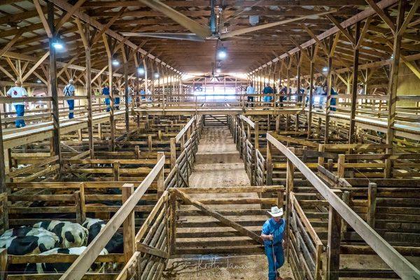 Shipshewana Livestock Auction Barn