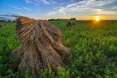 Landscape Photography: Wheat Shocks in LaGrange County, Indiana